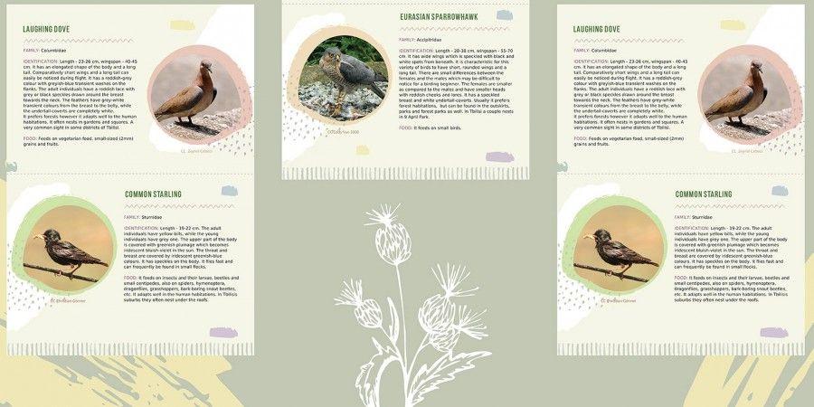 ბროშურის დიზაინი საბუკოსთვის (საზოგადოება ბუნების კონსერვაციისათვის)
